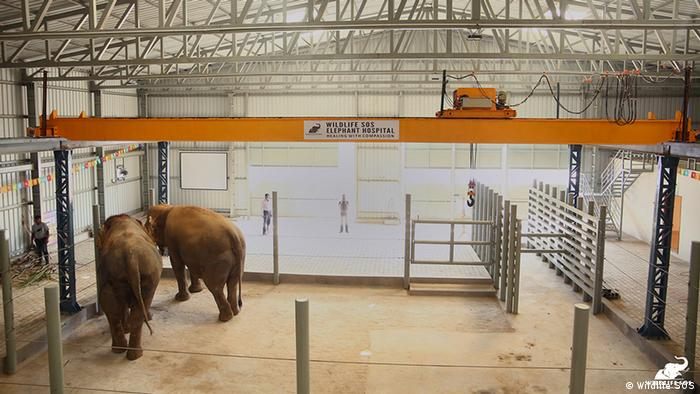 Two Indian elephants wait for treatment (Wildlife SOS)