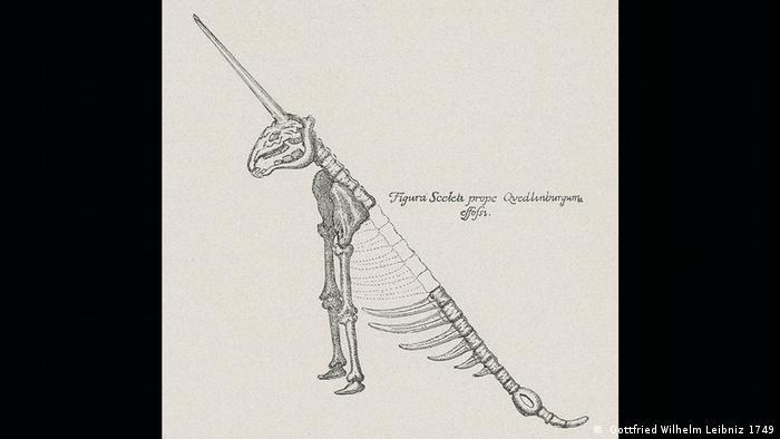 A drawing of a unicorn skeleton ( Gottfried Wilhelm Leibniz 1749)