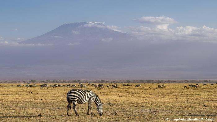 A zebra against the backdrop of Mt Kilimanjaro (Imago/robertharding/A. Cavalli)