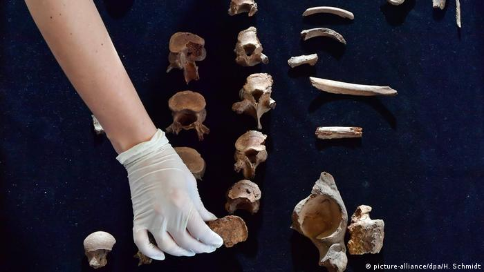 The bones of the prince of Helmsdorf, who scientists now say was the victim of the world's oldest known political assassination (picture-alliance/dpa/H. Schmidt)