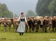 An alpine farmer drives her cattle