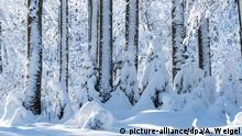 BdT - Schnee im Bayerischen Wald