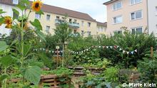 Urban Gardening in Bonn BeschreibungAusschnitt des StadtFrüchtchen-Gartens in Bonns Innenstadt CopyrightMarie Klein