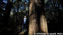 Aokigahara-Wald Suicide Forest Japan Kyochi Watanabe