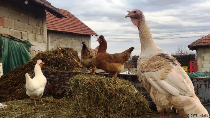 Kosovo Koretiste Bauernhof