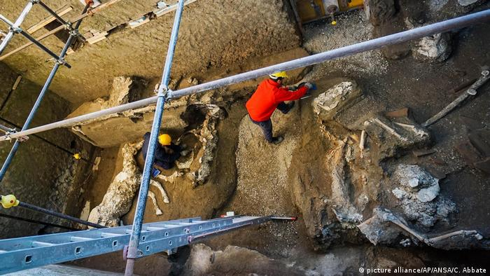 An archaeologist inspects the remains of a horse skeleton in the Pompeii archaeological site,