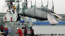 Japan Symbolbild Walfang