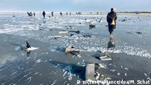 Niederlande Terschelling MSC Zoe Frachterhavarie Strandgut