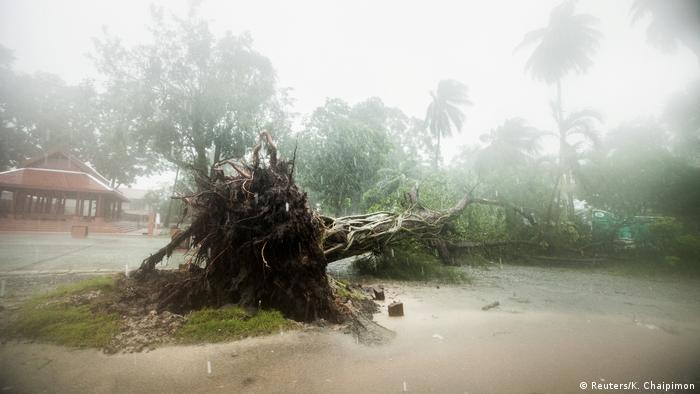 A fallen tree is seen as tropical storm Pabuk approaches the southern province of Nakhon Si Thammarat province