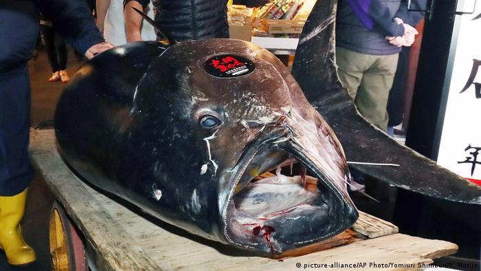 Japan Versteigerung Rekord-Thunfisch (picture-alliance/AP Photo/Yomiuri Shimbun/R. Morija)