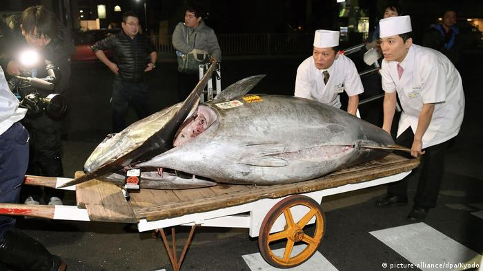 Tuna auction (picture-alliance/dpa/Kyodo)