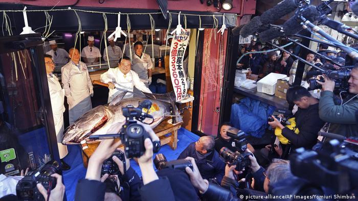 Tuna auction (picture-alliance/AP Images/Yomiuri Shimbun)