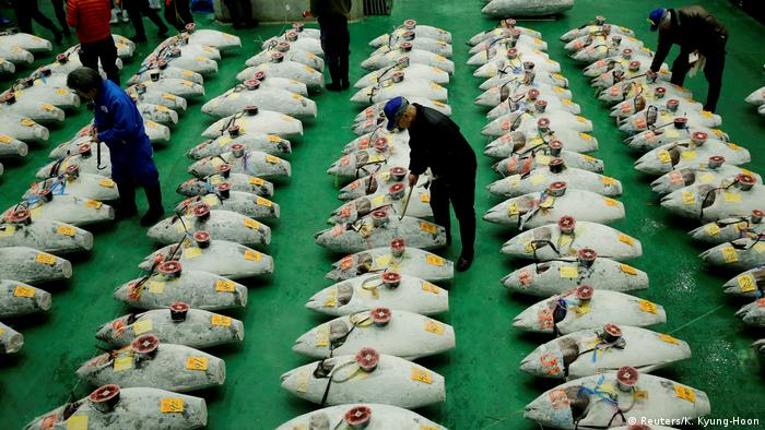 Wholesalers check the quality of frozen tuna displayed during the Toyosu fish market's first tuna auction in this year in Tokyo (REUTERS)