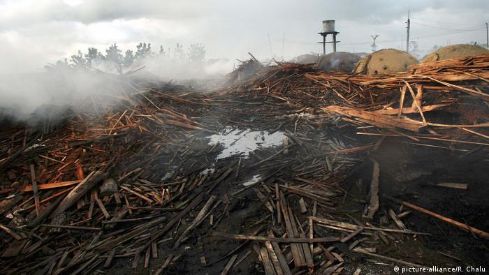 Regenwald Abholzung, Brasilien (Foto: picture-alliance/R. Chalu)
