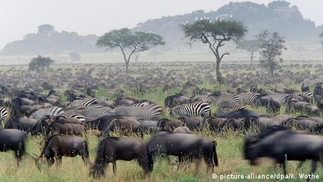 Afrikas Nationalparks (picture-alliance/dpa/K. Wothe)