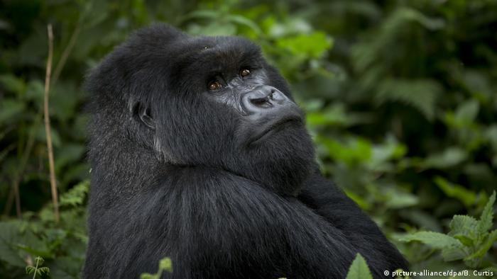 Afrikas Nationalparks