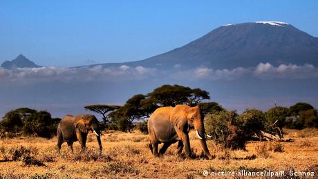 Afrikas Nationalparks (picture-alliance/dpa/R. Schnoz)