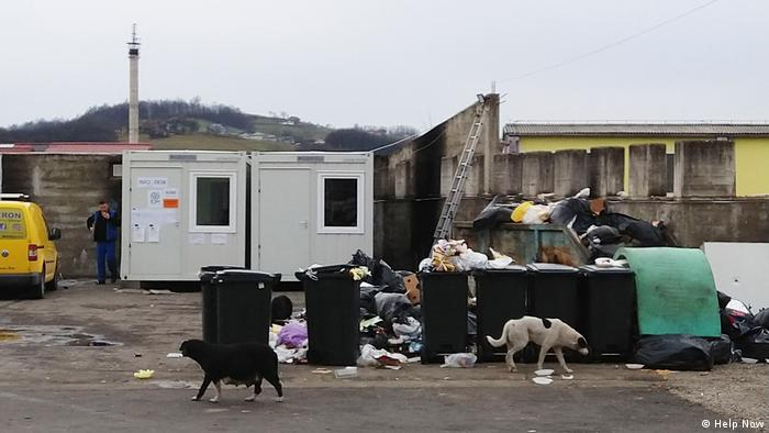 Stray dogs and garbage at the camp in Velika Kladusa (Help Now)