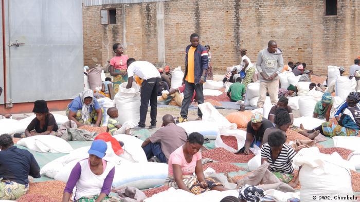 Men and women separating seed in Chisamba, Zambia