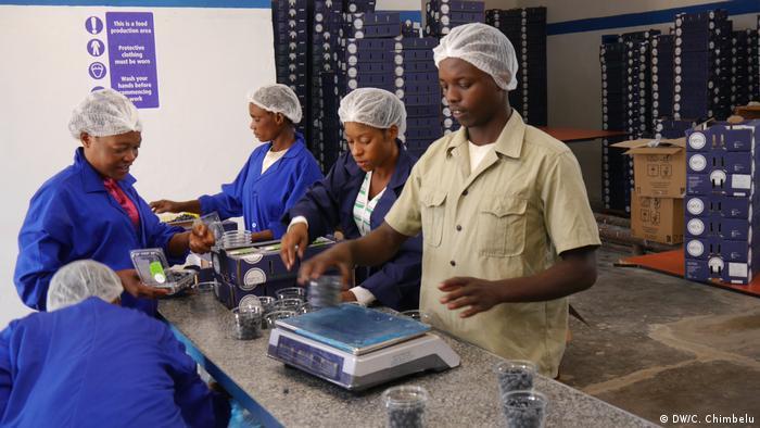 Blueberry processing at Zambezi Ranch Ranch Farm