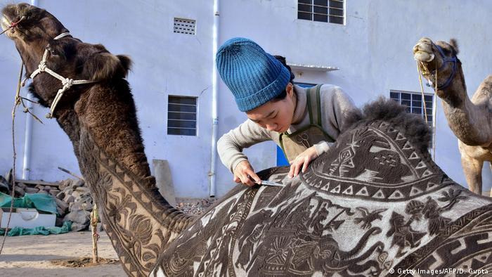 BdTD Indien Kamelfriseur