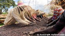 Workers dry red coffee cherries at the Tilamo cooperative of Shebedino district in Sidama, Ethiopia November 29, 2018. Picture taken November 29, 2018. REUTERS/Maheder Haileselassie