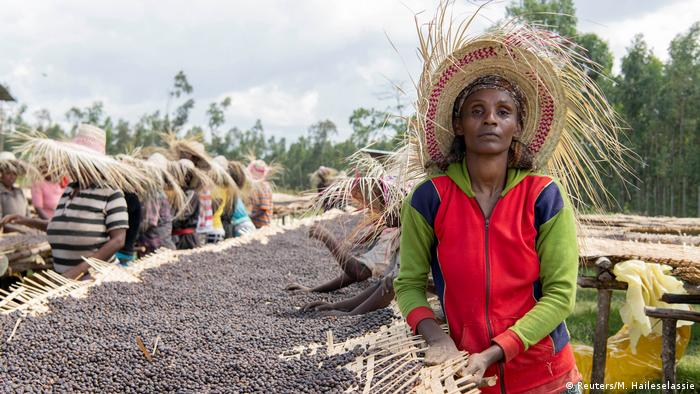 Auf der Kaffee-Plantage der Kooperative Shebedino in Äthiopien