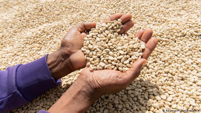 Rohkaffee in Äthiopien - Abhilfe gegen Preisschwankungen kann fair gehandelter Kaffee leisten