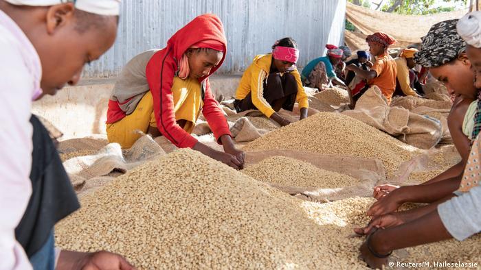 Kaffeebauern in der Kooperative in Sidana, Äthiopien.