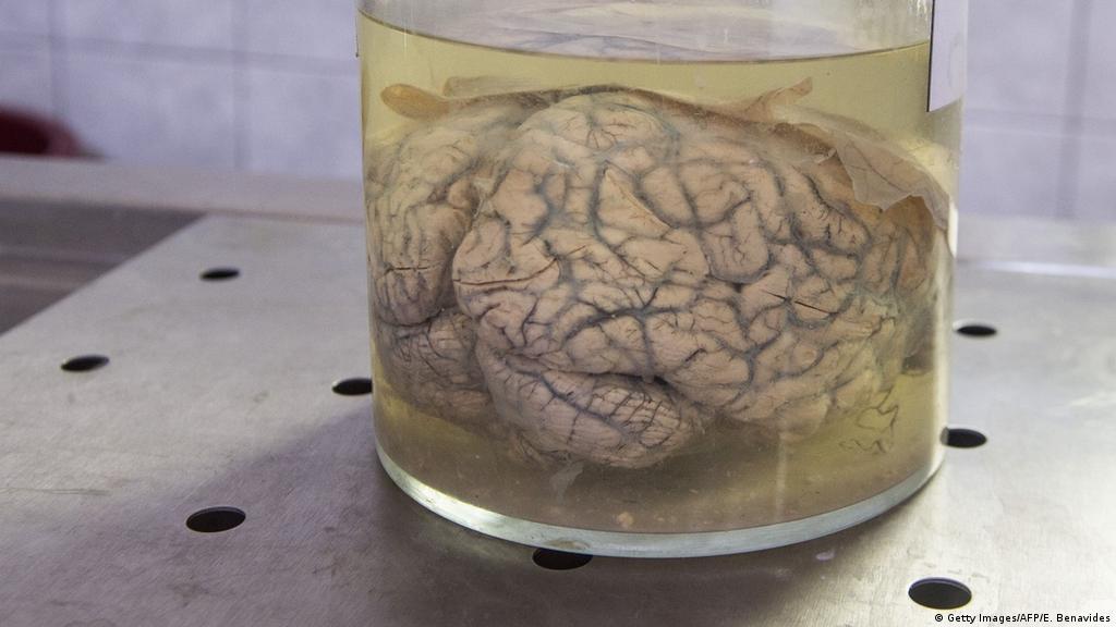 Действие конопли на мозг человека можно курить марихуану после инсульта