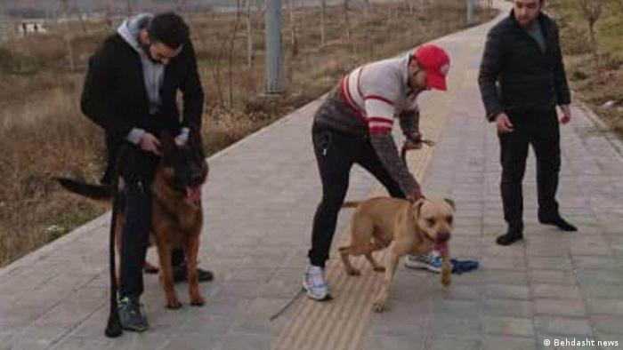 Iran Hunde Attacke in Park in Teheran