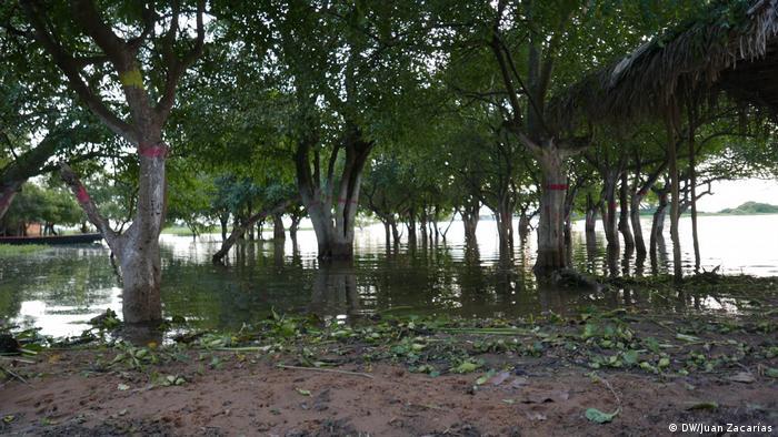 Bäume stehen im Uferwasser und spenden Schatten (DW/Juan Zacharás)
