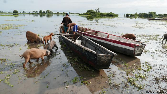 Fischer in Booten an einem Ufer, Schweine stehen im Wasser (Foto: DW/Juan Zacharás)