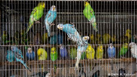 Bangladesch Vögel im Kafig (DW/M.M. Rahman)
