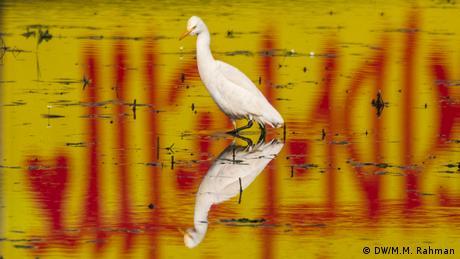 Bangladesch Vogel watet durch Wasser (DW/M.M. Rahman)