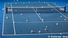 Tennis - Australian Open - Second Round - Melbourne Park, Melbourne, Australia, January 17, 2019. Birds are pictured on the court. REUTERS/Aly Song