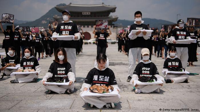 I u Južnoj Koreji sve je više onih koji prosvjeduju protiv trgovine psećim mesom