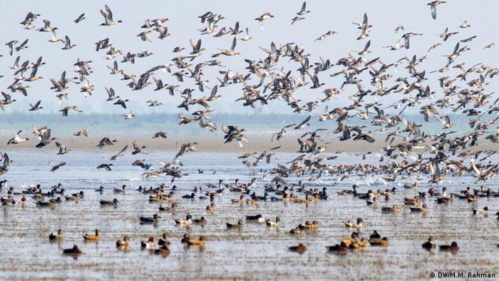Bangladesch Zugvögel in Tanguar Haor, Sunamganj