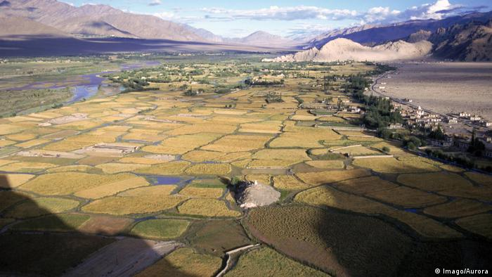 A birds-eye view looking at barley fields inLadakhi (Imago/Aurora)