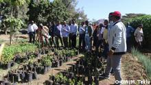Ffarmers and agriculture researchers visiting the Chaya plant at Haramaya University Topic: Haramaya University introduces Chaya plant to Ethiopia Wo: Haremaya University, Ethiopia Wann: 23.01.209 Author: Messay Teklu (DW Correspondent)