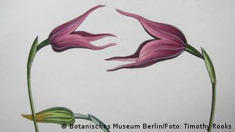 Desenho de duas flores