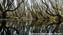 Болотное озеро на Фризском острове Нордернай (Нижняя Саксония)