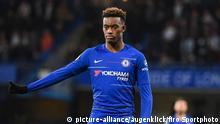 Fußball | FC Chelsea - Callum Hudson-Odoi