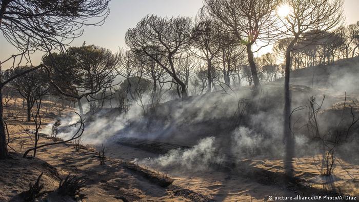 Spanien Waldbrand in der Nähe des Donana National Park