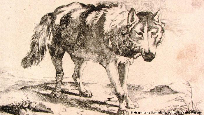 Illustration of a wolf by Marcus de Bye (from 1659) (Graphische Sammlung, Wallraf-Richartz-Museum)