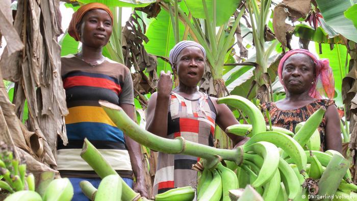 Ghana Kakaoanbau in der Krise