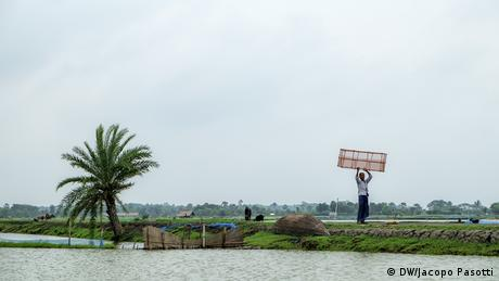 Shrimp aquaculture in the Bangla Delta