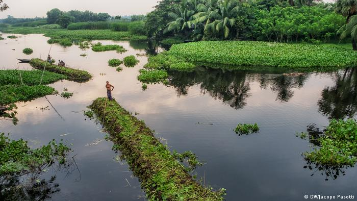 Floating gardens in Gopalganj, Bangladesh