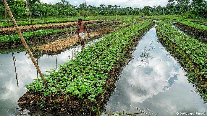 Rows of crops form canals