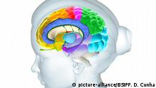 Anatomie des Gehirns